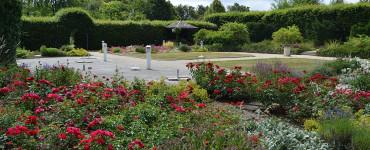Rosengarten in der Pomologie